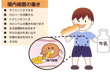 人間の腸の中には、腸内細菌がすんでいます。この腸内細菌の働きによって、... 腸内細菌コッカスっ